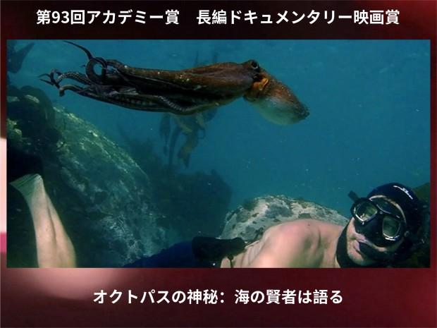 documentary_octopus